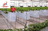 Intelligent pour la floriculture de serre en verre