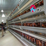 un type cage de poulet/modèle de Chambre de cage/ferme avicole de poulet oeufs de couche