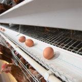 Высокое качество оцинкованной горячим тип куриное яйцо слой клеток