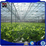 Invernadero de cristal inteligente Growing vegetal de Venlo