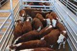 16 FT는 가축 위원회 또는 용접한 가축 가축 위원회를 4 측정한다