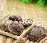 Fungo di Shiitake liscio secco fresco 2016
