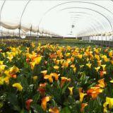 높은 대중적인 식물성 갱도 필름 녹색 집