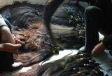 Materia prima 100% dei capelli umani di Remy del Virgin tagliata dalla massa Lbh 036 dei capelli delle giovani donne