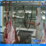 Strumentazione del macellaio del macello di macellazione delle pecore