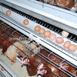 Cage de matériel de volaille de poulet de couche de Chine
