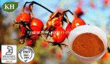 Naturel extrait de rose musquée - 10-30 % de la polyphénol, Vitamine C