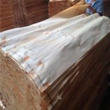 Chapa de pino para madera contrachapada (4 * 8feet)