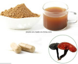 100%自然なReishiのエキスの粉かGanoderma Lucidum