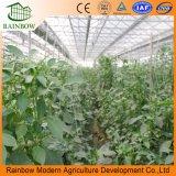 Invernadero de la PC de /Vegetable del invernadero del túnel del jardín/del invernadero de Polytunnel