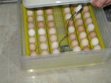 De mini Machine van de Broedplaats van het Ei van de Kip van Ce van de Incubator van 96 Eieren Automatische