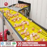 Grande capacité de la couche de poulet cages en batterie