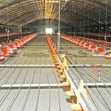 Equipo completo de aves de corral de alimentación con la estructura de acero de diseño e instalación