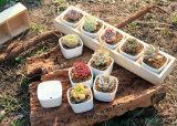 Caja de madera para la jardinería