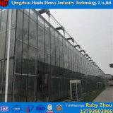 Fabricante comercial de la casa verde del invernadero de cristal del túnel de la azotea de Venlo