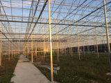 Workshop de galvanizados a quente e estrutura de aço da luz da estrutura de armazém