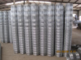 Field Fence에 있는 최신 Dipped Galvanized Knotted Wire Mesh