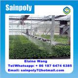 Multispan Commercial Plastic Film Tunnel Maison verte pour tomate
