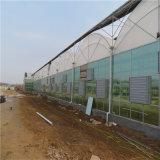 Serra di vetro di Venlo di prezzi di basso costo con il sistema idroponico