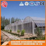 China-landwirtschaftlicher wachsender Raum wachsen Zelt-Gewächshaus