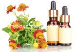 Olio essenziale del fiore puro della camomilla di 100% per cura di pelle