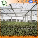 Agriculture를 위한 수경법 Greenhouse Multi Span Film Greenhouse Commercial Greenhouse
