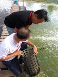 Unigrow mejora la calidad del agua en el agrupador, Camarones y Talipia, cría de cangrejo