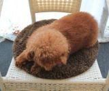قابل للغسل فائقة ليّنة /Natural معمل [دينغ] كلب/قطع محبوب سرير/وسادة/حصيرة [ك0052]