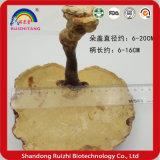 Basswood/fungo selvaggio di Ganoderma Lucidum/Reishi /Lingzhi