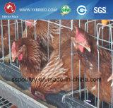 Système automatique de cage de poulet de couche d'étoile argentée