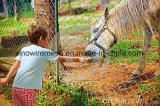 農場のためのSailinの金網のチェーン・リンクの塀