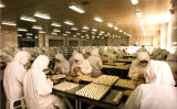 Ozon-Maschinen-Luft-Desinfizierer der Nahrungsmittelfabrik-40g 50g industrieller