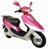 Scooter (HS50QT-1)