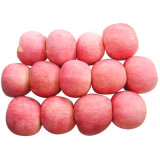 El nuevo cultivo para la venta de manzana Fuji fresco