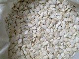 新しい穀物の白いカボチャシード