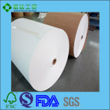 Nahrungsmittelgrad PET überzogenes Papier für Schnellimbiss-Kasten