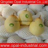 La nouvelle récolte fraîcheYa chinoispour les grossistes de poire