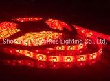 5 LEIDENE van de Garantie van de jaar Hoge Helderheid 3528 LEIDEN van de Decoratie van Enige Lichte LEIDENE van de Decoratie van Kerstmis van de Strook van de Kleur Flexibele Lichte OpenluchtKerstmis van de Verlichting Licht