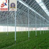 Serra di vetro usata per Growing di fiore con la struttura d'acciaio