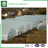 Serre di agricoltura del film di materia plastica per i pomodori/fiori