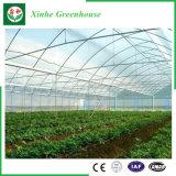 야채를 위한 Qingzhou 농업 강철 프레임 플라스틱 온실