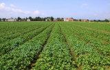 水溶性のマイクロ要素肥料の栄養要素肥料