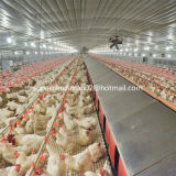 BreederのためのCompelete Poultry Control Shed Equipment