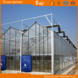 고품질 광대하게 이용된 Venlo 유형 유리 온실