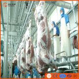 Testa 100 per progetto del carceriere della strumentazione di macellazione di Halal del bestiame dello spostamento