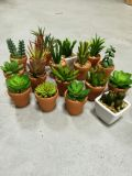 Plantes et fleurs artificielles de la centrale succulente Gu809204509