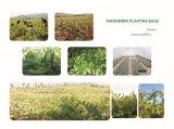 Выдержка мангустана 100% естественная с Alpha Mangostin 2%-90%