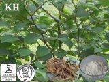 Высокой естественной Polygonum Cuspidatum П. E
