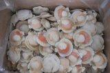 Le bac de remplissage automatique de fruits de mer avec peseur Multihead