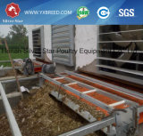 Automatische Geflügelfarm-Batterien A3l90 für Legehennen